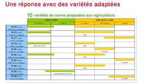 Les différentes variétés de cannes proposées aux agriculteurs