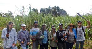 Les participants au concours de coupeurs de canne