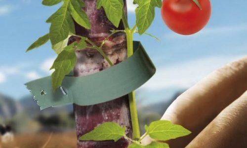 diversification-agricole-carre